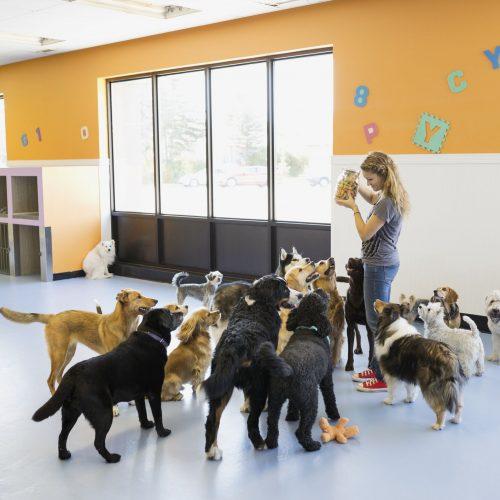 dog-daycare-9dc7cf7477f748f7ac99cdee3564041b